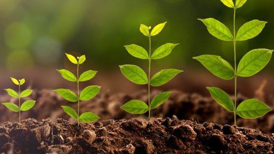 Sostenibilidad: prácticas para la industria alimentaria