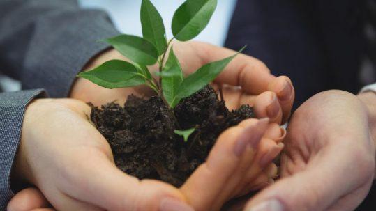 Claves de crecimiento sostenible en la industria alimentaria